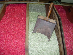 Bulk seed lima corn